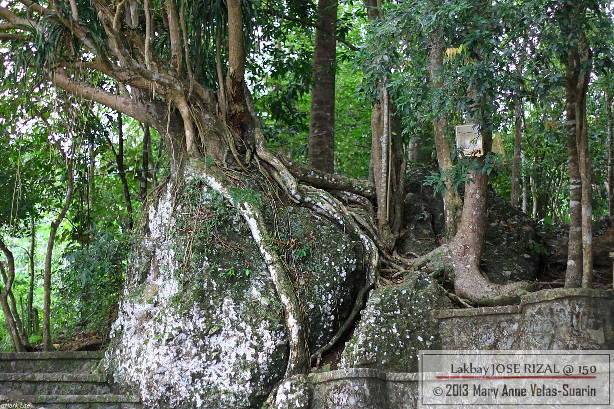 Some of the very old trees at the shrine. Rizal and his students planted many of them. [Photo by Mary Anne Velas-Suarin]