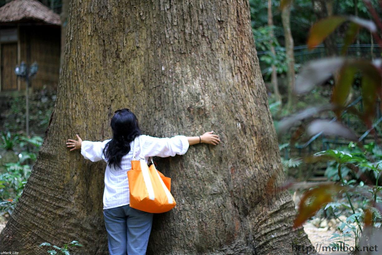 I just have to hug this tree! This Baluno tree was believed to have been planted by Jose Rizal himself. [Photo by JR Suarin]